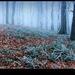 tajomstvo mrazivého lesa