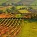 vinarska krajina