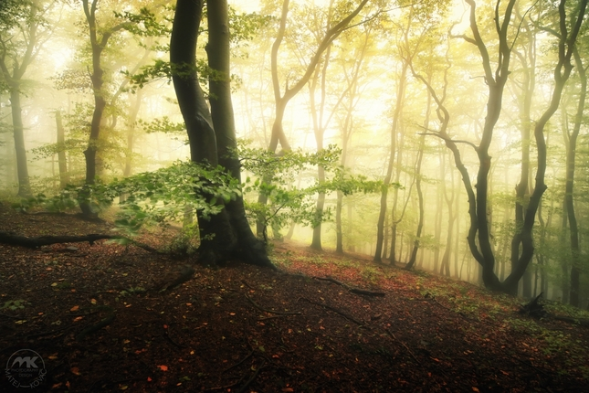 Bratislavské lesy