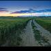 cesta na zapad