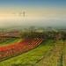 jesenna vinarska atmosfera