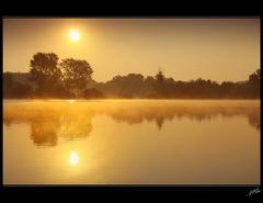 zlatiste rano