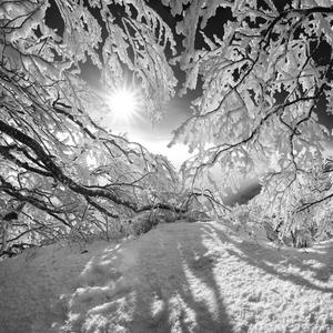 Rozprávková zima na Chmeľovej