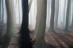 Pajštúnsky les