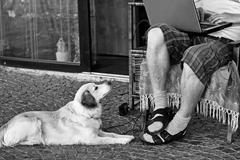 Psia trpezlivosť
