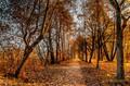 Jesenna cesta