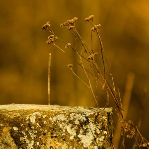 Zimný kvet