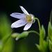 ...darujem Ti biely kvet...