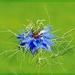 Médea v kvete zakliata