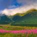 hra farieb v tatrach