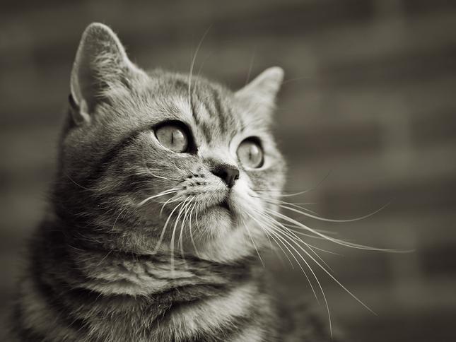 Teen sexy mačička obrázok