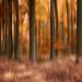 jesenná spomienka