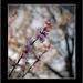 radosť z jari I