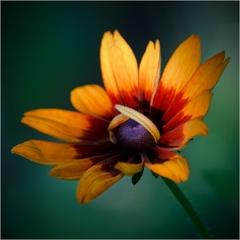 zo života kvetín