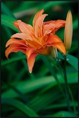zo života kvetín II