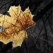 jesenná rozlúčka