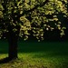 jarne svetlo