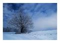 Winter tree I.
