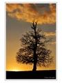 Strom srnka slnko