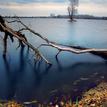 Zlato - modra jesen