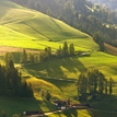 Alpske luky