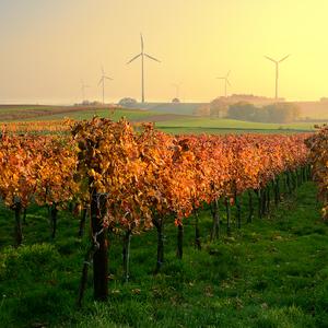 Rakúske vinice