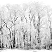 Cierno - biela zima