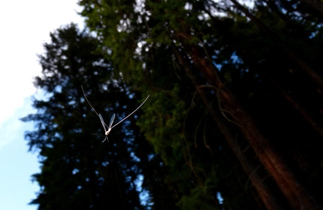 Lietajuci hmyz