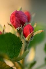 jablonkovo