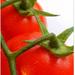 Due pomidori