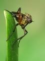 mucha na zelenom liste
