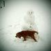 Môj pes a snehuliak.