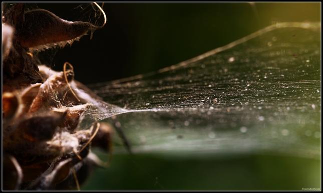 Pavučina ....detail...abstrakcia