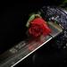 Ruža a meč