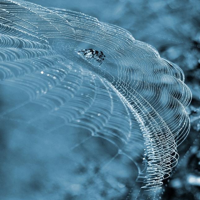 pavúk umelec