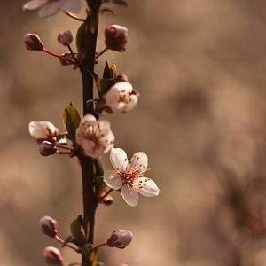 Keď kvitne jar ...