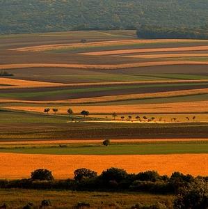 Krivky krásnej Moravy