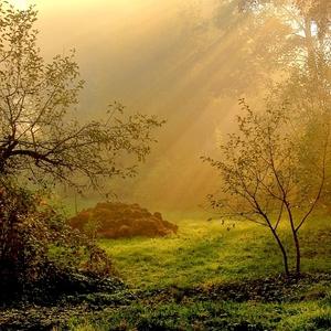 Kopa hnoja a krásne ráno