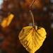 jesenný list