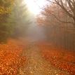 prechádzka jeseňou