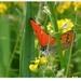 Zo života motýľa