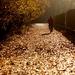 V ústrety jeseni