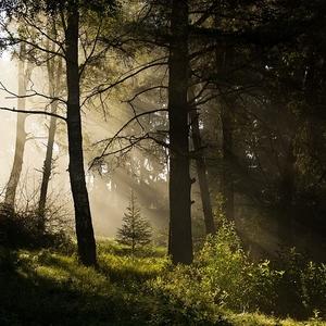 ranným lesom