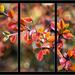 Cervenkava  farba z palety jesen