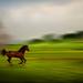 Kde sa koník zo života teší...