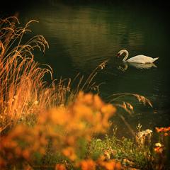 Len tak si plávam ... (2)