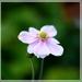 kvetinka :)