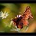 Láska motýľov