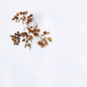 minimalizmus v snehu