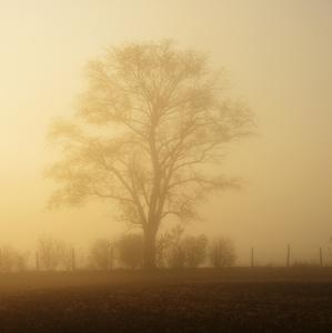 v hmle stratený a sám
